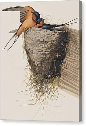 Barn Swallow Canvas Print by John James Audubon