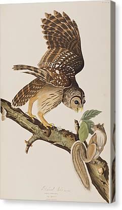 Barred Owl Canvas Print by John James Audubon