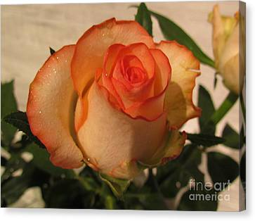 Beautiful  Rose Canvas Print by Joyce Woodhouse