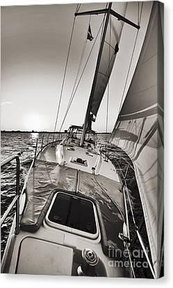 Beneteau 49 Sailing Yacht Close Hauled Charleston Sunset Sailboat Canvas Print by Dustin K Ryan