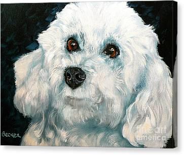 Bichon Frise Canvas Print by Susan A Becker