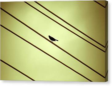 Bird On A Wire Canvas Print by Marilyn Hunt