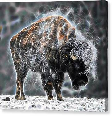 Bison Collection Canvas Print by Marvin Blaine