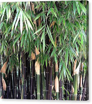 Black Bamboo Canvas Print by Mary Deal