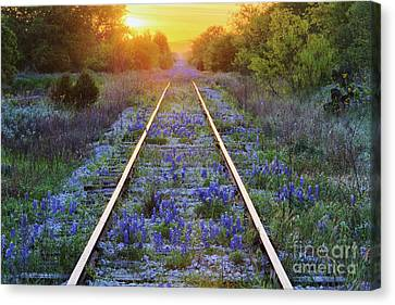 Blue Bonnets On Railroad Tracks Canvas Print by Jeremy Woodhouse