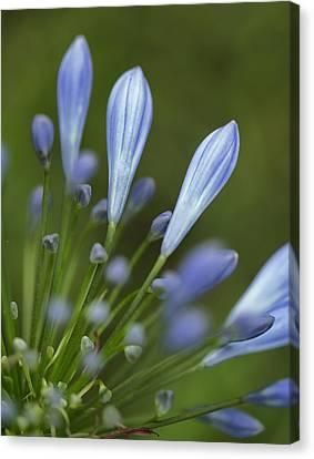 Blue Flowers Canvas Print by Nailia Schwarz