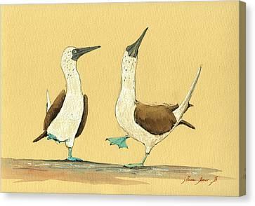 Blue Footed Boobies Canvas Print by Juan  Bosco