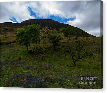 Bluebells Canvas Print by John Collier