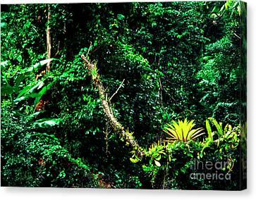 Bromeliads El Yunque National Forest Canvas Print by Thomas R Fletcher