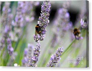 Bumblebee Canvas Print by SnapHound Photography