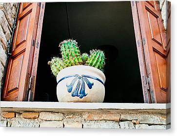 Cactus Canvas Print by Tom Gowanlock