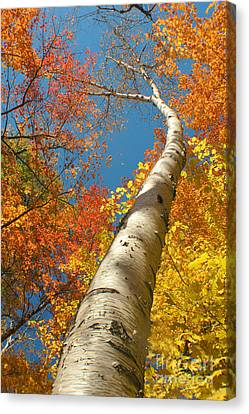 Canadian Autumn Canvas Print by Mircea Costina Photography