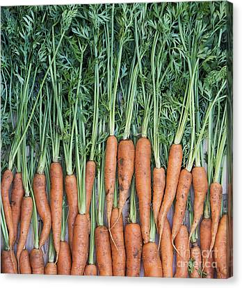 Carrots Canvas Print by Tim Gainey