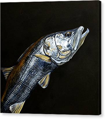 Caught In The Surf Snook Canvas Print by Joan Garcia