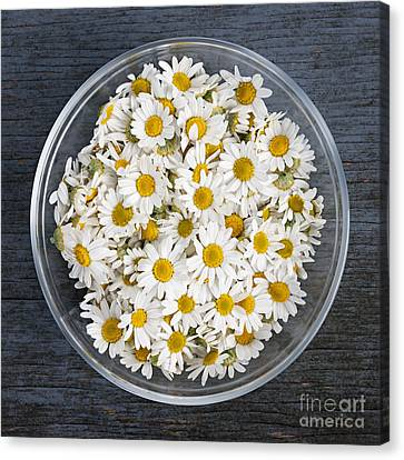 Chamomile Flowers In Bowl Canvas Print by Elena Elisseeva