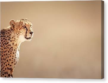 Cheetah Portrait Canvas Print by Johan Swanepoel