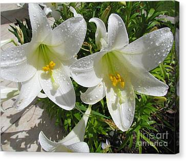 Christmas Lilys Canvas Print by Joyce Woodhouse