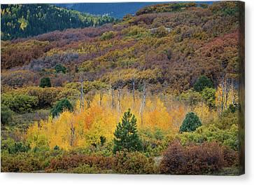 Colorado Autumn Canvas Print by Joseph Smith