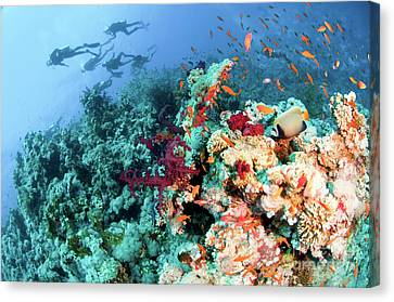 Coral Reef  Canvas Print by Hagai Nativ