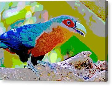 Cuckoo   Canvas Print by Judy Kay
