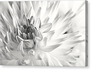 Dahlia Canvas Print by Nailia Schwarz