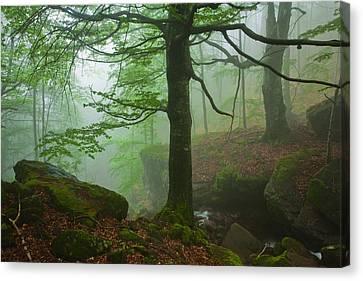 Dark Forest Canvas Print by Evgeni Dinev