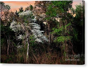 Easter Dogwood Canvas Print by Tamyra Ayles