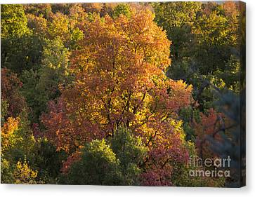 Fall Colors Canvas Print by Gloria Pasko