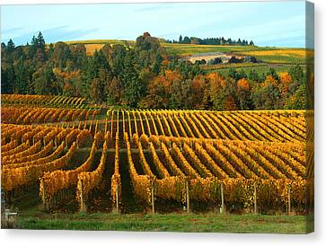 Fall In A Vineyard Canvas Print by Margaret Hood