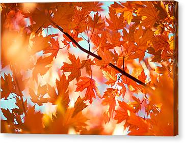 Field Of Orange Canvas Print by Todd Klassy