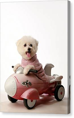 Fifi Loves Her Rocket Car  Canvas Print by Michael Ledray