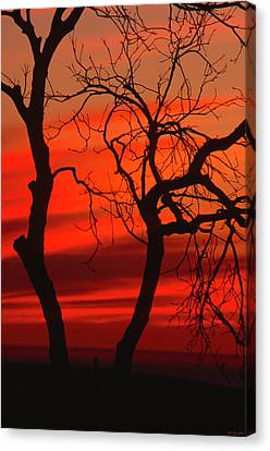 Figueroa Mountain Road Canvas Print by Soli Deo Gloria Wilderness And Wildlife Photography