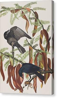 Fish Crow Canvas Print by John James Audubon
