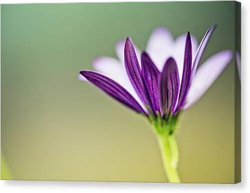 Flower On Summer Meadow Canvas Print by Nailia Schwarz