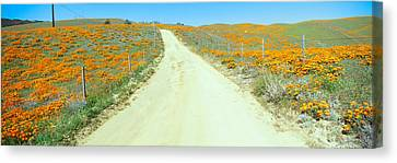 Flowers & Poppies, Antelope Valley Canvas Print by Panoramic Images