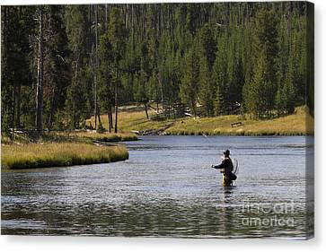 Fly Fishing In The Firehole River Yellowstone Canvas Print by Dustin K Ryan
