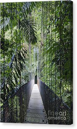 Footbridge In Costa Rican Forest Canvas Print by Jeremy Woodhouse