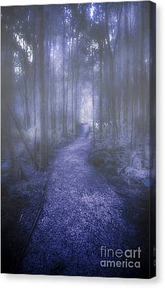 Forest Of Darkness Canvas Print by Jorgo Photography - Wall Art Gallery