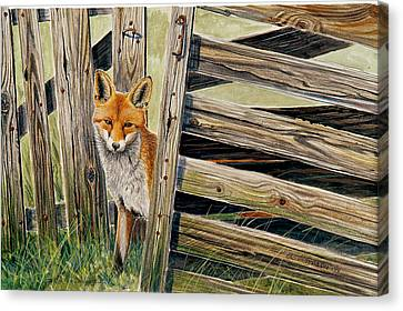 Fox At The Gate Canvas Print by Dag Peterson