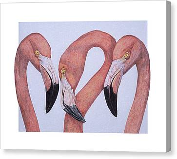 Flamingos From The Neck Up Canvas Print by Dee Van Houten