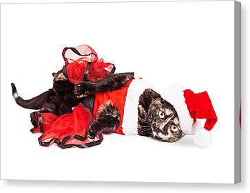 Funny Christmas Santa Cat Laying Canvas Print by Susan Schmitz