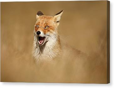 Funny Fox Canvas Print by Roeselien Raimond