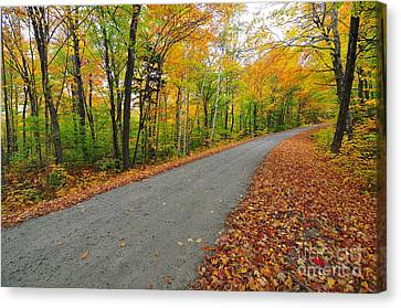 Gale River Road Canvas Print by Catherine Reusch  Daley