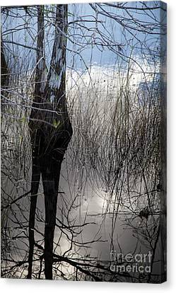 Glades 4 Canvas Print by Richard Smukler