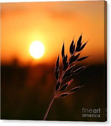 Golden Sunset Canvas Print by Franziskus Pfleghart