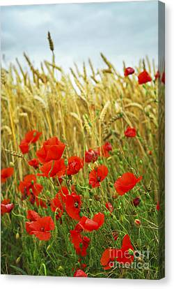 Grain And Poppy Field Canvas Print by Elena Elisseeva