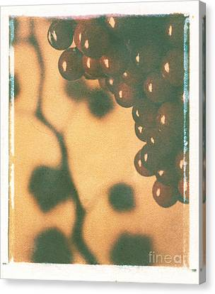 Grapes Canvas Print by Jim Wright