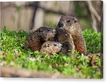 Happy Family Canvas Print by Mircea Costina Photography
