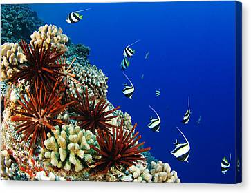 Hawaiian Reef Scene Canvas Print by Dave Fleetham - Printscapes