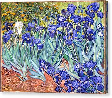 Irises Canvas Print by Van Gogh